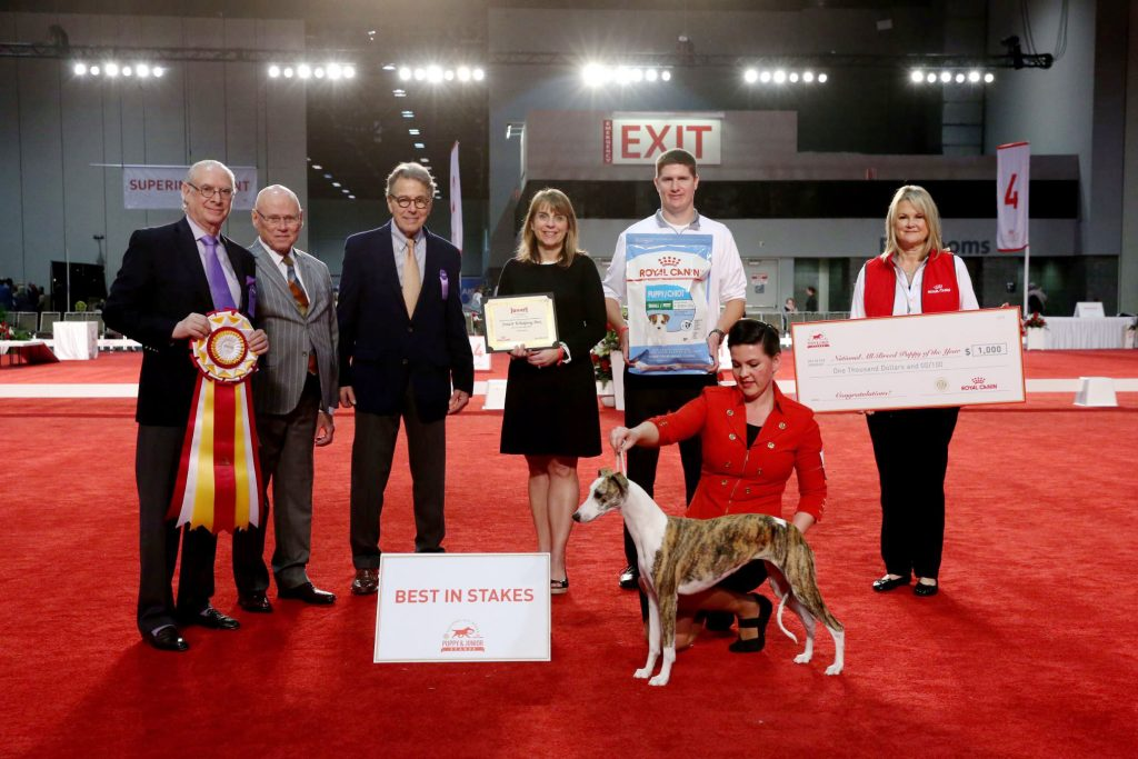 AKC Royal Canin National All-Breed Puppy of the Year 2018