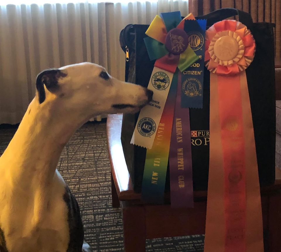 Opie with his futurity ribbons