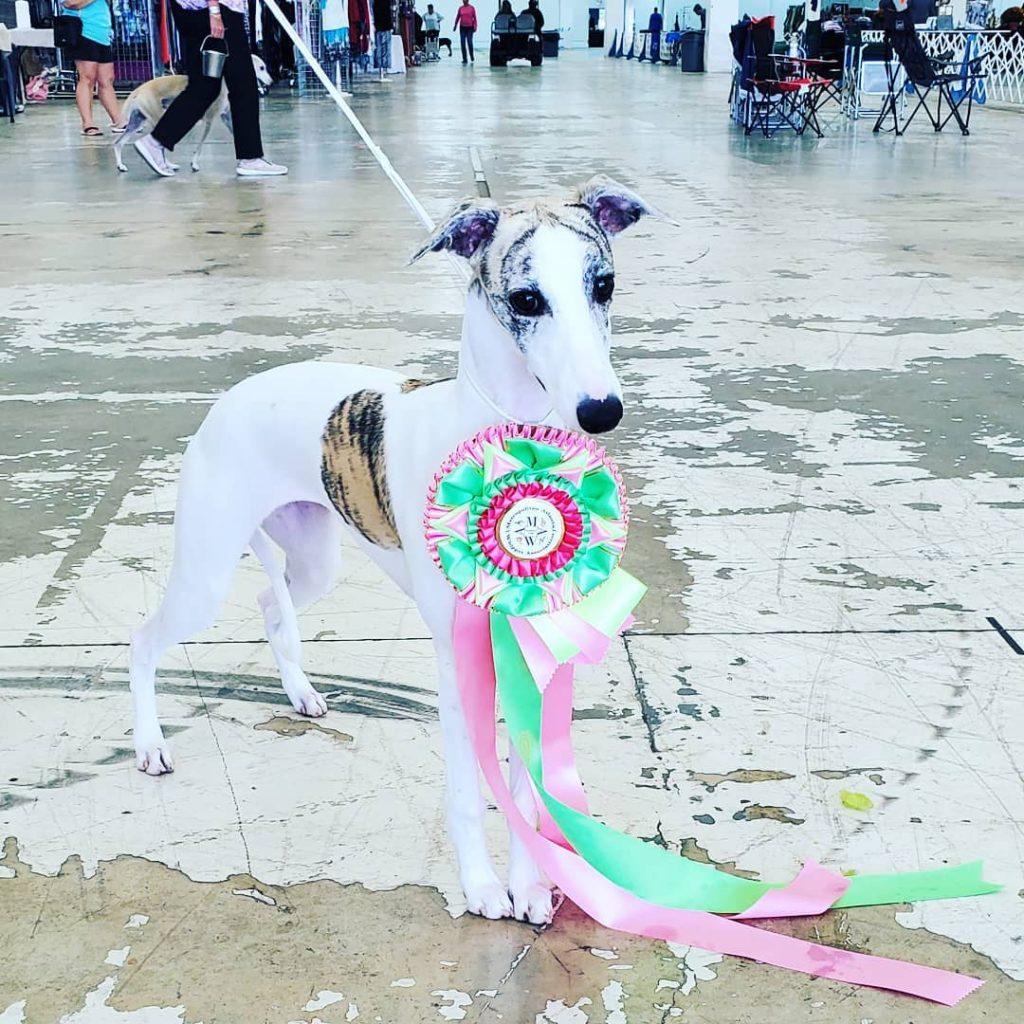 Pearlie Best In Sweeps